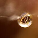 World in a drop by Graeme M