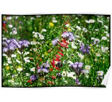 The Beauty of Spring  Poster