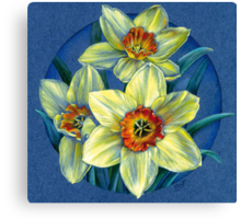 Daffodils - the joys of spring  Canvas Print