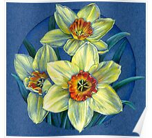 Daffodils - the joys of spring  Poster