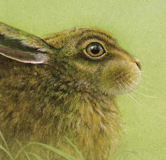 Portrait of a Rabbit by Sarah Trett