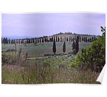 Tuscan landscape, Sienna, Italy Poster