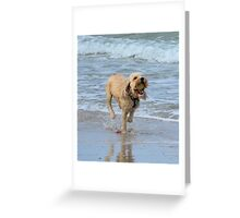 Shaggy playing Fetch Greeting Card