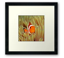 Anemone and Nemoish. Framed Print