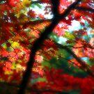 Dream Leaves by John Dalkin