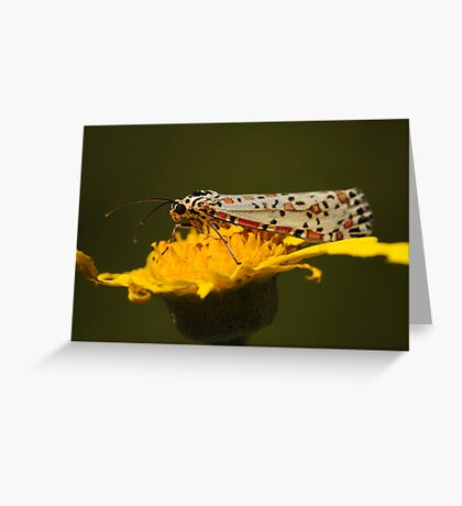 Heliotrope Moth  Greeting Card