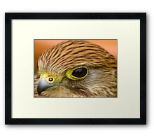 Watching Me - Watching You Framed Print