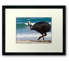 Strolling by - cassowary on the beach Framed Print