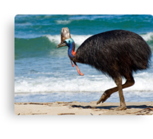 Strolling by - cassowary on the beach Canvas Print