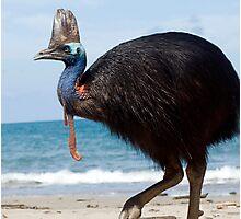 Beach Comber - cassowary at Etty Bay Photographic Print