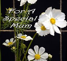 For A Special Mum by Kristina K