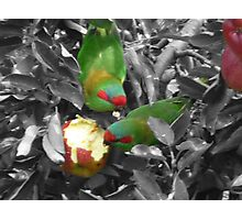 Attack of the Apple Theives Photographic Print