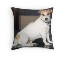 Harry - table top dog Throw Pillow