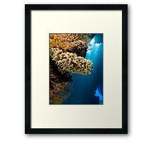 Sponge in prominent position Framed Print