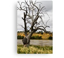 Ancient Branches Canvas Print