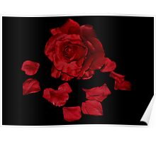 Red Rose and Petals Poster