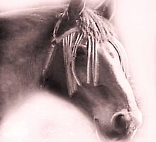 Beautiful Equine by Dawn B Davies-McIninch