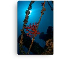 Sponge at the wreck -Cedar Pride- Canvas Print