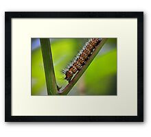 Insect Intersection Framed Print