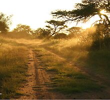 """""""African dust - at Dusk"""" - Polokwane game reserve by Sandy Beaton"""