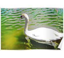 The swan and the aquamarine lake Poster