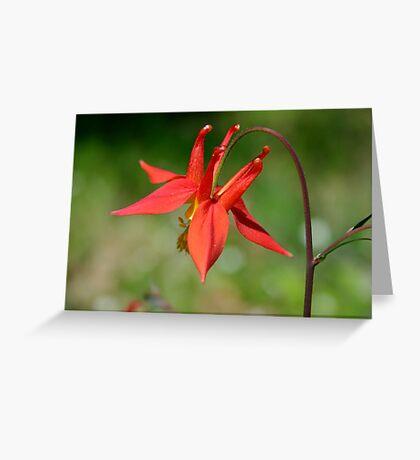 Aquilegia (Columbine) Greeting Card
