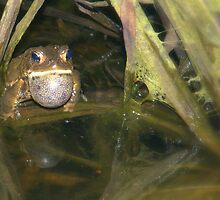 A Frog who would awooing go! by Billlee
