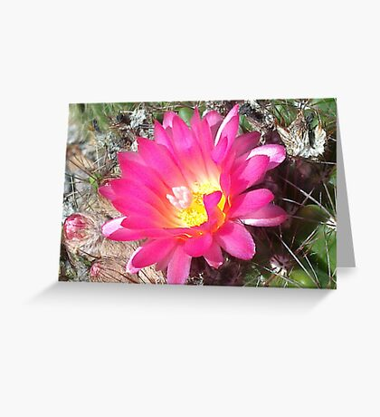 Lovely but Lonely cactus flower Greeting Card