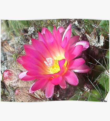 Lovely but Lonely cactus flower Poster