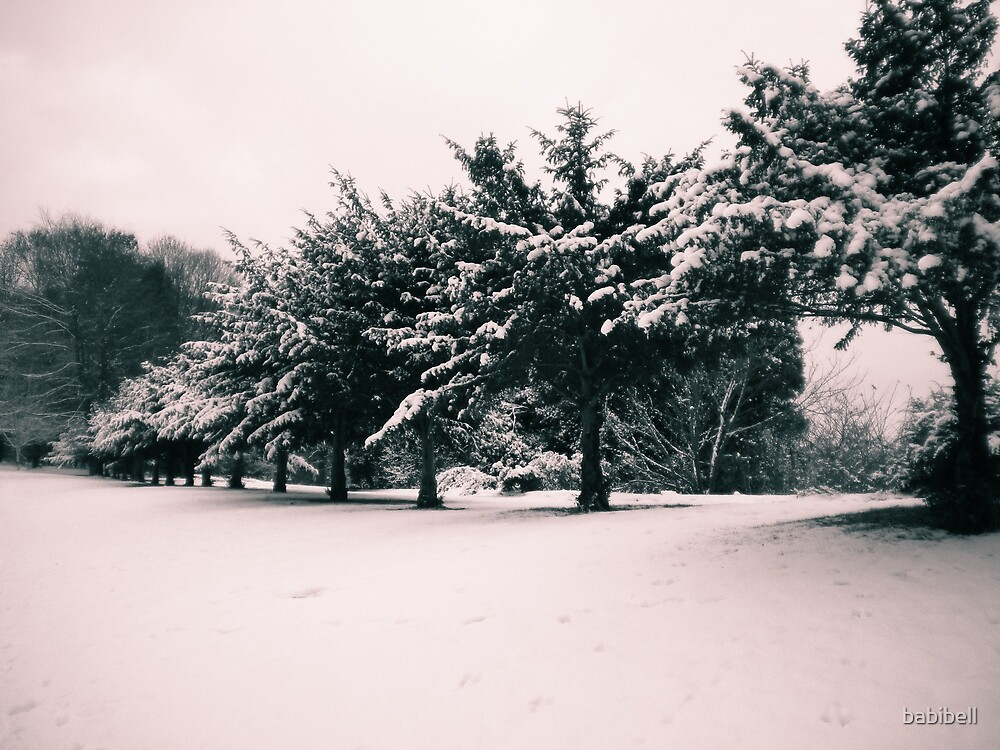 Snow Trees by Claire Dimond