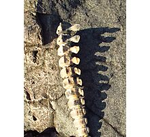 Strong Spine With Sun Photographic Print