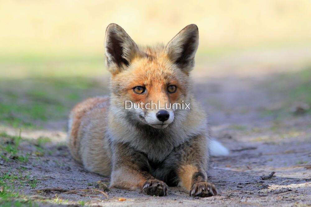Red Fox - 2267 by DutchLumix