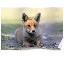 Red Fox - 2267 Poster