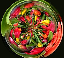 A bunch of tulip flowers in spherical by Robert Gipson