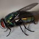 spy a fly by katpartridge