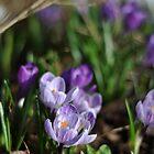 Purple Delight by Hilda Rytteke