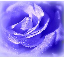 La Rose Bleu by Morag Bates