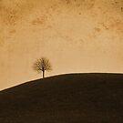 Orange Tree by Luke Griffin
