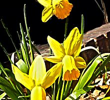 Spring Time  by Monica Engeler