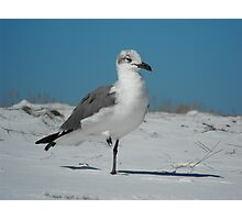 Stand on One Leg Photographic Print