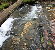 Creek in Pend Orielle County Washington by Bauerphoto