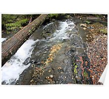 Creek in Pend Orielle County Washington Poster
