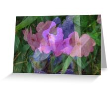 Soft Floral Beauty Greeting Card