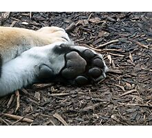 Tiger Paw- Dublin Zoo Photographic Print