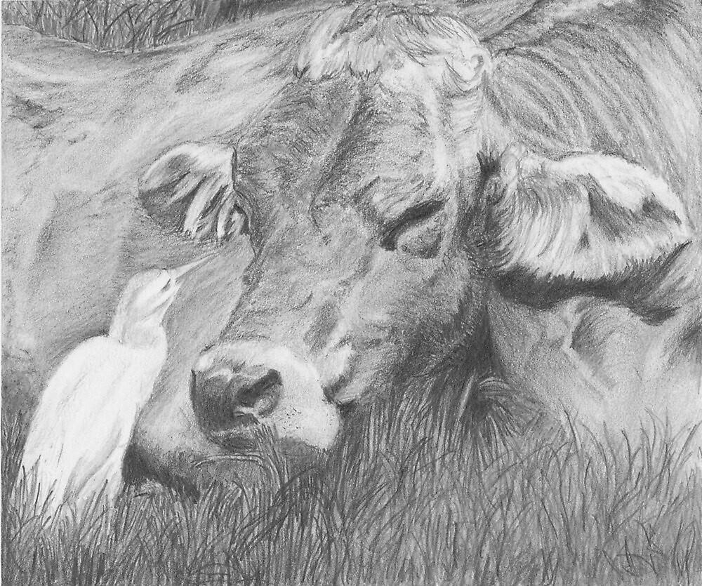 Interspecies Communication - cow and egret by P. Leslie Aldridge