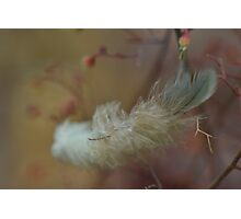 Feather Weight Photographic Print