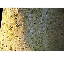 Sunset tree macro Photographic Print