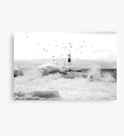 freezing gulls Canvas Print
