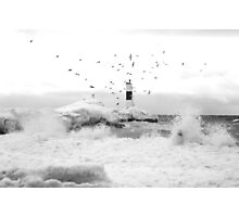 freezing gulls Photographic Print