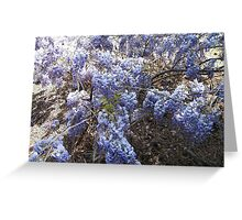 Wisteria Bush Greeting Card
